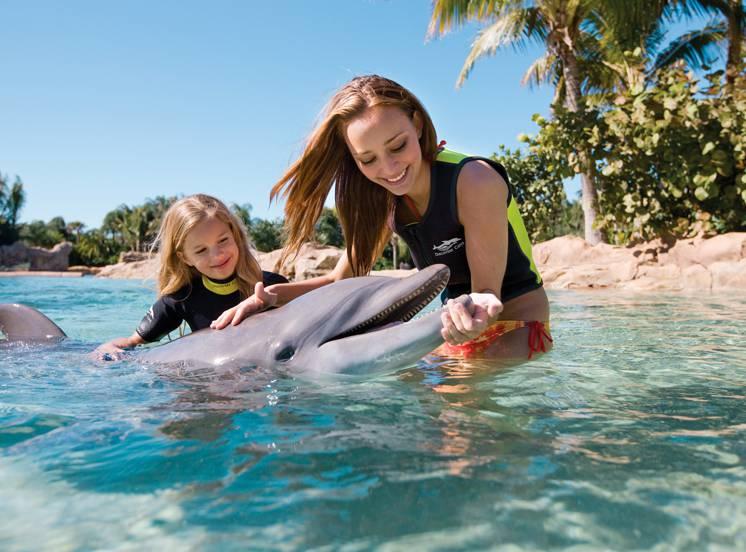 Ingresso Discovery Cove - Orlando