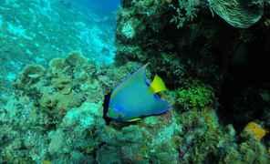 Snorkel em Cozumel: Palancar, Colômbia e El Cielo Reefs All Inclusive