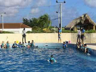 Dolphin Royal Swim Punta Cana