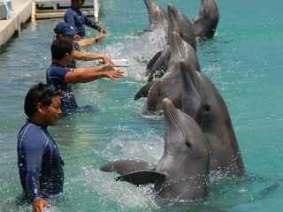 Os amantes de golfinhos nadam